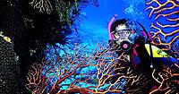 Фотогалерея. Чудеса подводного мира